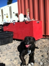 Field dog Abi keeps an eye on things while we set up water monitoring equipment at Pad 55-29